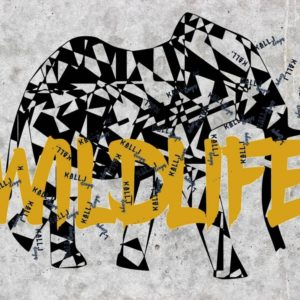 Elefant -Wildlife-