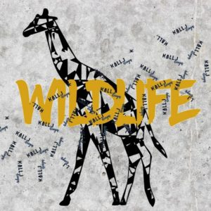 Giraffe -Wildlife-